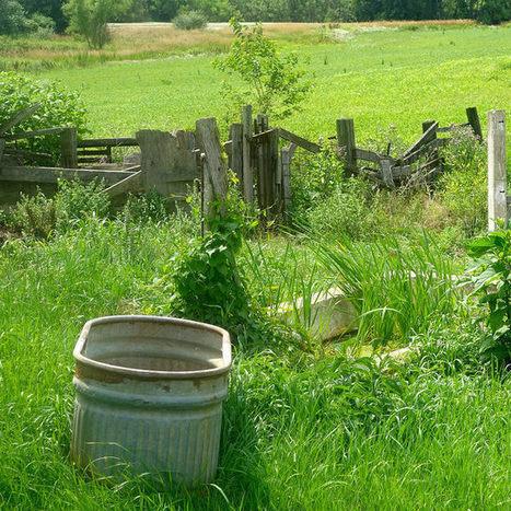 3 Effective, All-Natural Ways To Eliminate Weeds | Gardening | Scoop.it