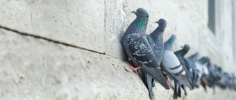 ¿Cómo ahuyentar o espantar palomas? 7 Ideas | Pest Control Madrid | Salud, Estética y más | Scoop.it