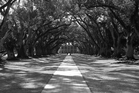 Long walk to the beautiful plantation | Oak Alley Plantation: Things to see! | Scoop.it