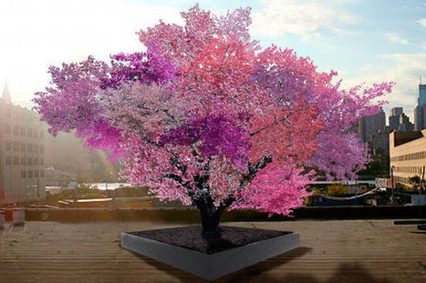 This tree produces 40 different types of fruit (ScienceAlert) | Technology Empowering People | Scoop.it