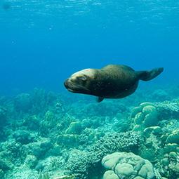 Seven Fascinating Seal Facts   Plongée Environnement marin Scuba Diving   Scoop.it