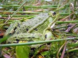 L'évolution récente des reptiles et amphibiens en Bretagne | L'environnement en Bretagne | Scoop.it