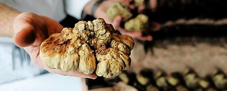 It's white truffle season in Alba | Italian Inspiration | Scoop.it