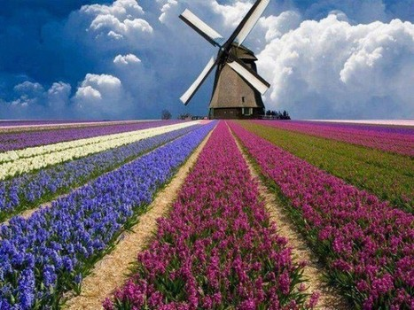 Spacious Flower Fields In Holland   The Best Places in the World to Travel   Scoop.it