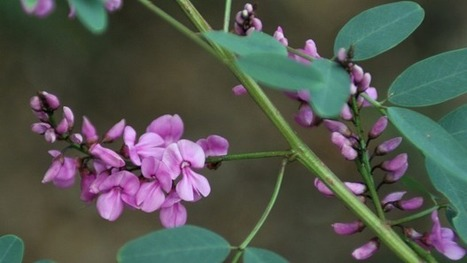 It's time to put the bush back into the bush capital | Australian Plants on the Web | Scoop.it