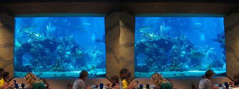 15 Best Table Service Restaurants In Disney World | Disney Dining | Walt Disney World | Scoop.it