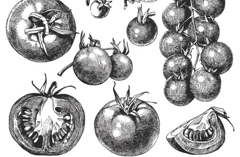 From Poison to Passion: The Secret History of the Tomato | Vegetable Gardening Resources | Scoop.it
