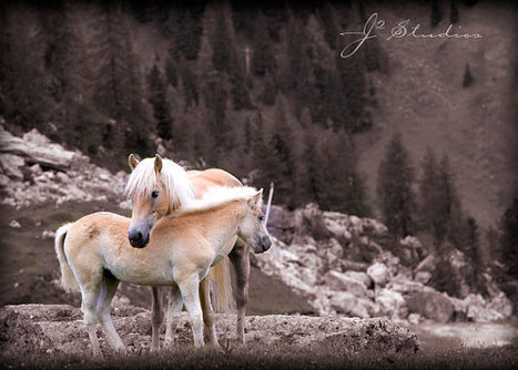 Wild Horses Born Free Caress Hugging Italy Mountains | Cool Happenings | Scoop.it