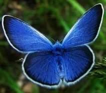 Endangered species talk in Farmington draws big crowd - Foster's Daily Democrat | Biodiversity protection | Scoop.it