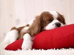 Depresión canina | tu perro | Scoop.it