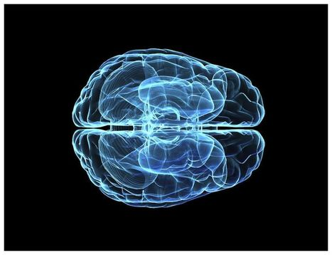 Cooperating Mini-Brains Show How Intelligence Evolved | DigitAG& journal | Scoop.it