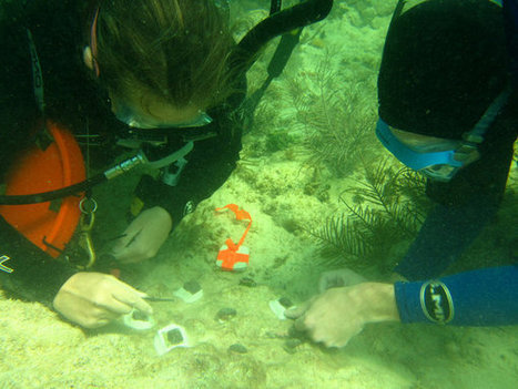 A Lifesaving Transplant for Coral Reefs - New York Times | Science Fun | Scoop.it