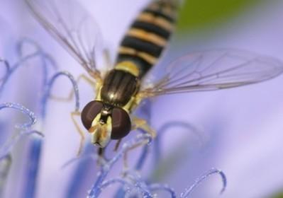 La préservation des pollinisateurs un enjeu majeur pour la nature et l'homme | Actualités Nova-Flore | Scoop.it