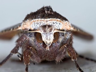 Moth Eyes Inspire More Efficient Thin-Film Solar Cells | Future Trends Research | Scoop.it