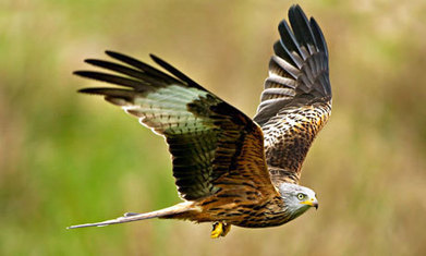 UK's wild bird population continues to decline | Sustain Our Earth | Scoop.it