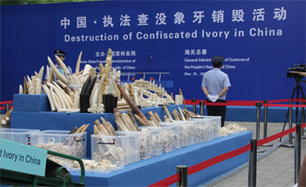 CITES Secretary-General's remarks on the destruction of confiscated elephant ivory in Beijing, China | Wildlife Trafficking: Who Does it? Allows it? | Scoop.it