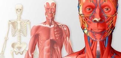 Objectif Languedoc-Roussillon - Innovation - Innovation - Callimedia lance la 1e banque d'images anatomiques en ligne | La revue de presse de Callimedia | Scoop.it