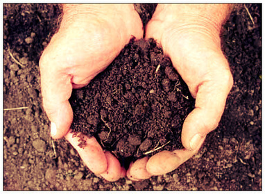 How To Reduce Soil's pH Naturally | Gardener's Life | Scoop.it