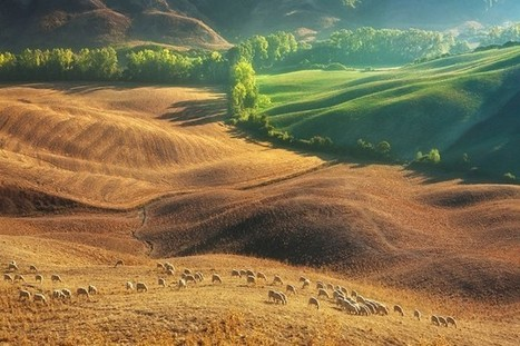 Flocks of Sheep Roam Across the Tuscan Countryside in Breathtaking Aerial Photos | Le It e Amo ✪ | Scoop.it