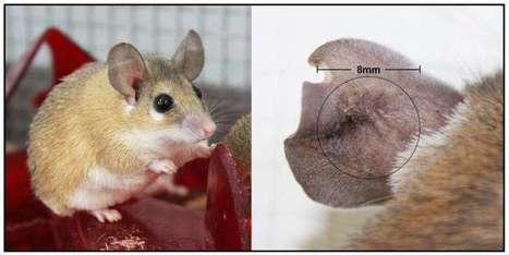 UK researchers one step closer to understanding regeneration in mammals | News we like | Scoop.it
