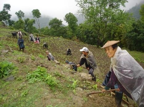 Bután, Cero fertilizantes. Será el primer país del mundo en permitir sólo la agricultura ecológica - Ecoportal.net   Opinión   Scoop.it
