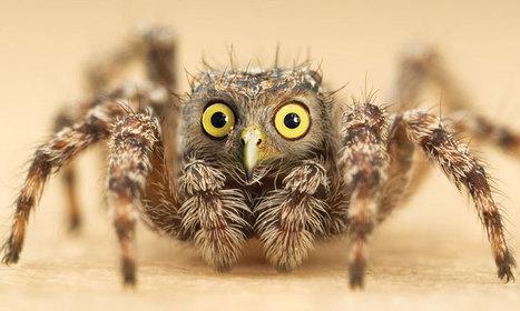 28 nouvelles espèces d'animaux complètement loufoques ... | Animaux | Scoop.it