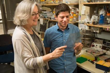 Scientists discover an on/off switch for aging cells | Chasing the Future | Scoop.it