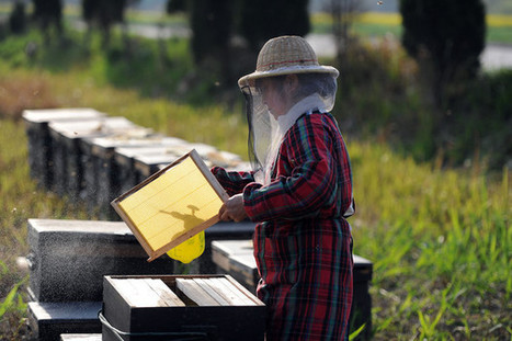 Honey Sting Leads to U.S. Charges of Smuggling From China | Smugglers | Scoop.it
