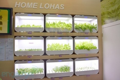 Home Lohas brings hydroponic gardening into your room, rabbit guard not included | cool stuff from research | Scoop.it