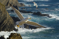 The Story of Jonathan Livingstone Seagull | All about nature | Scoop.it