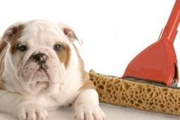 Dog Care - Dog Grooming | Canine Advice, Tips and Tutorials | Cesar Millan | Dog Grooming Boca Raton | Scoop.it
