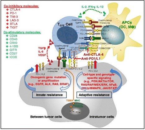 Current status and perspectives in translational biomarker research for PD-1/PD-L1 immune checkpoint blockade therapy.J. Hematol. Oncol. | Immunology and Biotherapies | Scoop.it