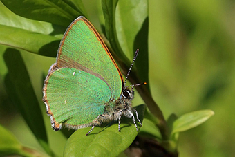 Artificial optical nanostructure outperforms butterfly wings | SciFrye | Scoop.it