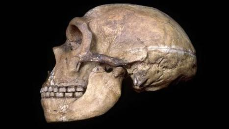 What Neanderthals' healthy teeth tell us about their minds | Aux origines | Scoop.it