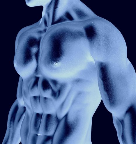 8 Reasons You're Still Weak or Fat | The 5 Chambers Of Fitness | Scoop.it