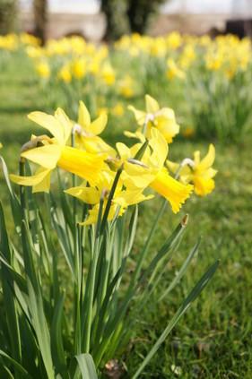 J'aime le printemps (Fle A1 - A2 petit texte sur les saisons) | T4 - Citoyenneté, liberté, solidarité | Scoop.it