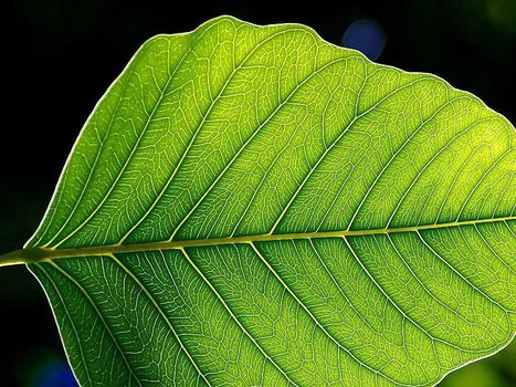 New Life for The Artificial Leaf? | Biomimicry | Scoop.it