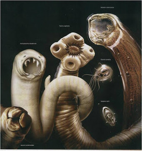 Tipos de parasitos | Clasificación de parasitos y respuesta inmune contra protozoarios y helmintos | Scoop.it