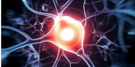 Alzheimer : des ultrasons restaurent la mémoire chez les souris | Aidants familiaux | Scoop.it