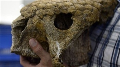 Treasure trove of #fossils found under #Venezuelan oil fields | The wonderful universe | Scoop.it