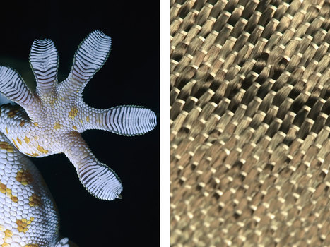 14 Smart Inventions Inspired by Nature: Biomimicry | Biomimicry | Scoop.it