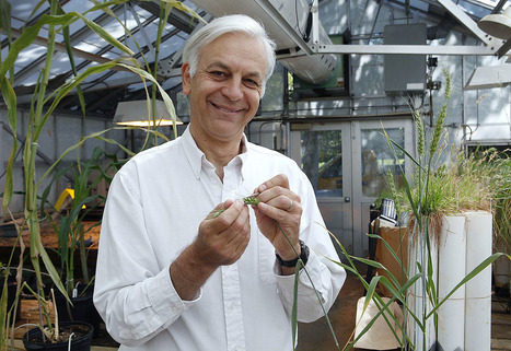 Plant geneticist Dubcovsky tapped for Wolf Prize, ag's Nobel | Plant Biology Teaching Resources (Higher Education) | Scoop.it