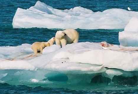 gros coup de cœur pour la balade arctique à bord de Libertaire | Hurtigruten Arctique Antarctique | Scoop.it