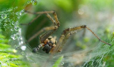 Du venin d'araignée comme insecticide naturel   zegreenweb   EntomoNews   Scoop.it