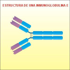 Efectos inmunomoduladores de la célula cebada | Funciones de Macrófagos, neutrófilos, eosinófilos, basófilos y celulas cebadas | Scoop.it