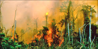 Climate Change, Drought Cause 11,000 Fires in Brazilian Amazon | GarryRogers NatCon News | Scoop.it