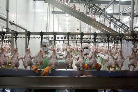 Etats-Unis : interdits de pause, des ouvriers contraints de porter des couches | ecology and economic | Scoop.it