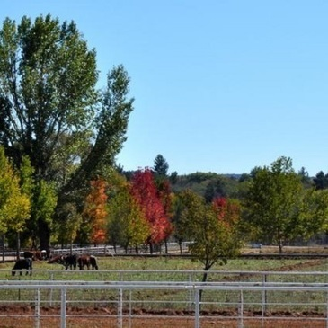 Donated ranch to help University of Arizona expand veterinary program | Bovine Veterinarian | CALS in the News | Scoop.it