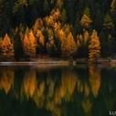 Automne au bord du lac – photographe nature | LunaCat Studio | Photographe | Scoop.it