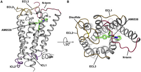 Crystal Structure of the Human Cannabinoid Receptor CB1 | Doctor Unite | Scoop.it